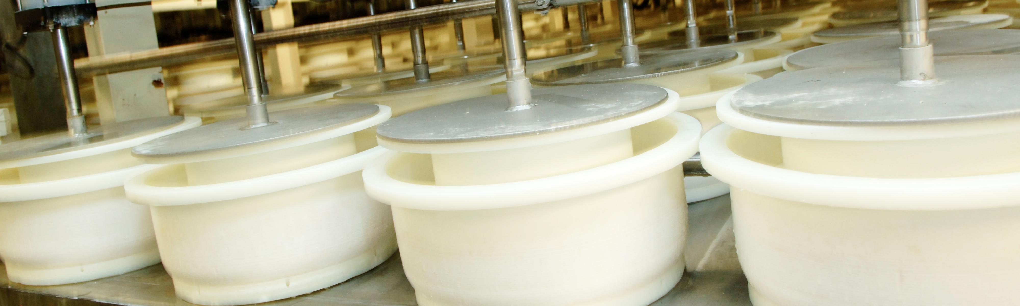 Kaas maken in de kaasfabriek