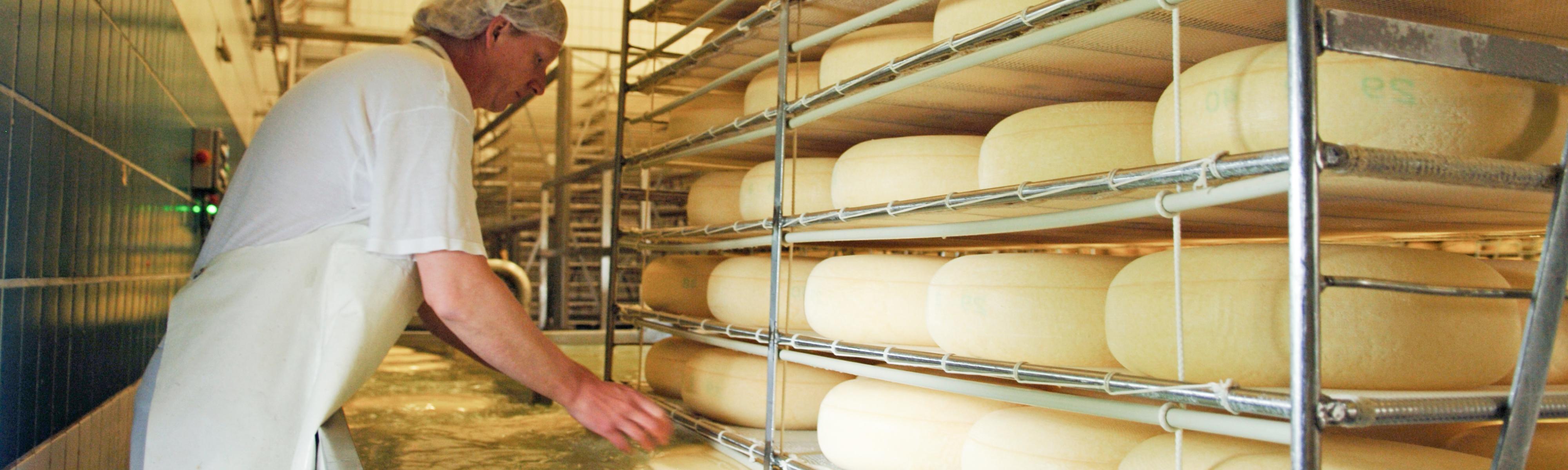 Kaas maken in de zuivelfabriek