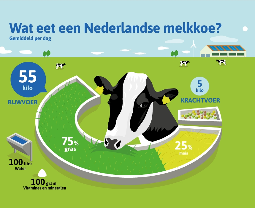 Wat eet een koe?