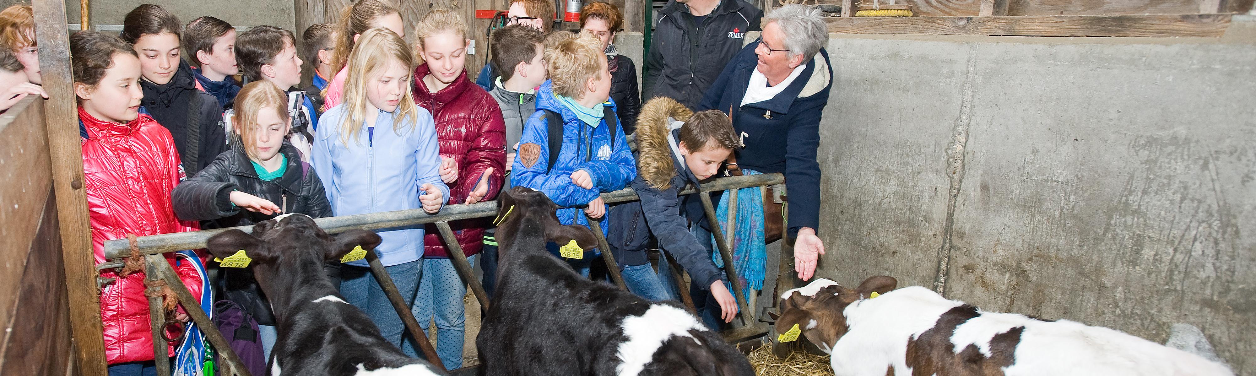Klas met kinderen op de boerderij