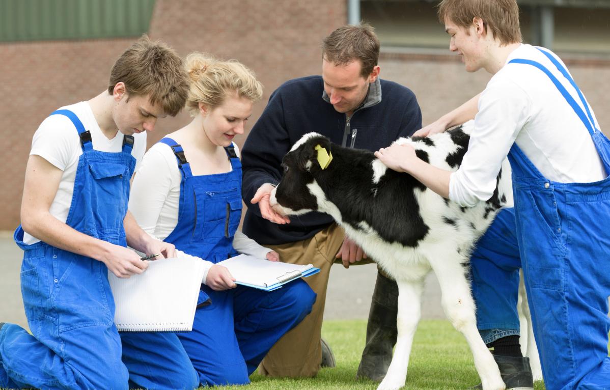 Leerlingen en boeren met kalfje