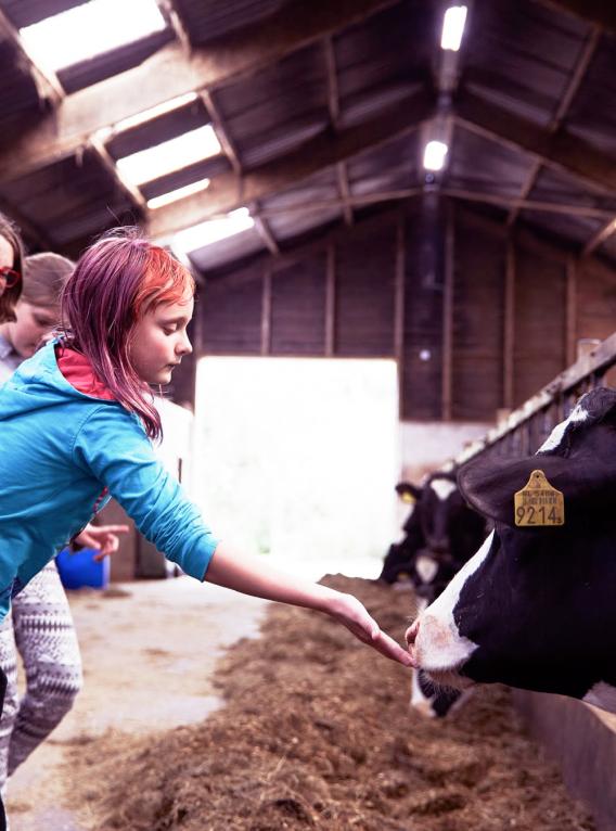 Kind steekt hand uit naar koe