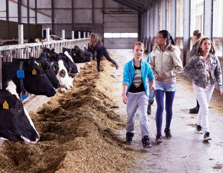 Kinderen bij de koeien op de boerderij