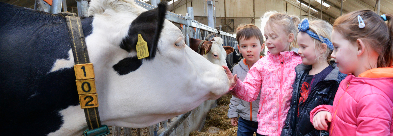 Kinderen bij de koe in de stal