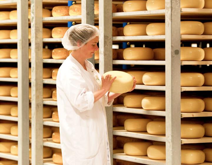Vrouw die een hele kaas controleert